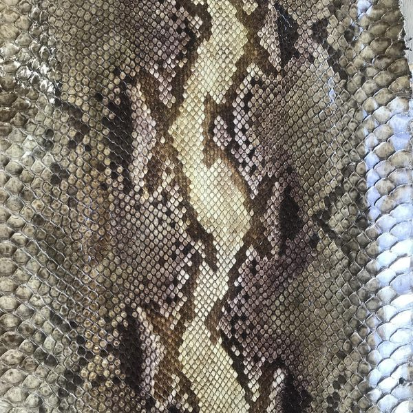 """""""SKU:10160 NAME:python leather impero gold ANIMAL:python leather SPECIE:reticulatus ARTICLE:impero COLOR:gold USE:leathergoods, shoes, garment SIZE:27+, 30+ THICKNESS:0,4/0,6 DESCRIPTION:soft, shinny, gold """""""
