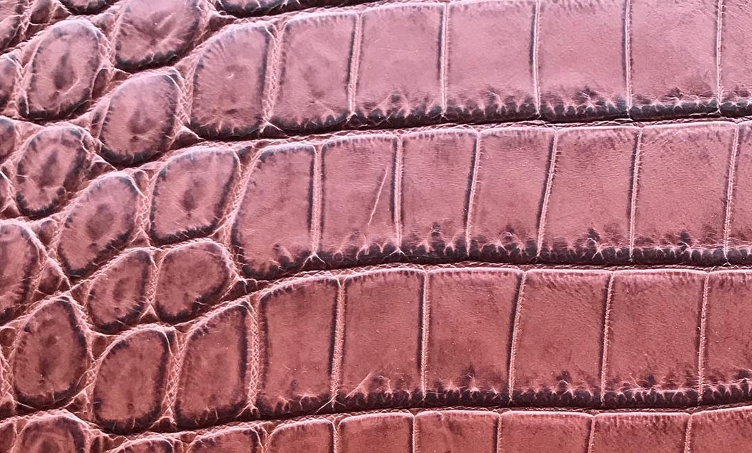 The crocodile leather: today we talk about the queen of skins